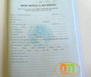 Hợp đồng lao động (tiếng Việt)